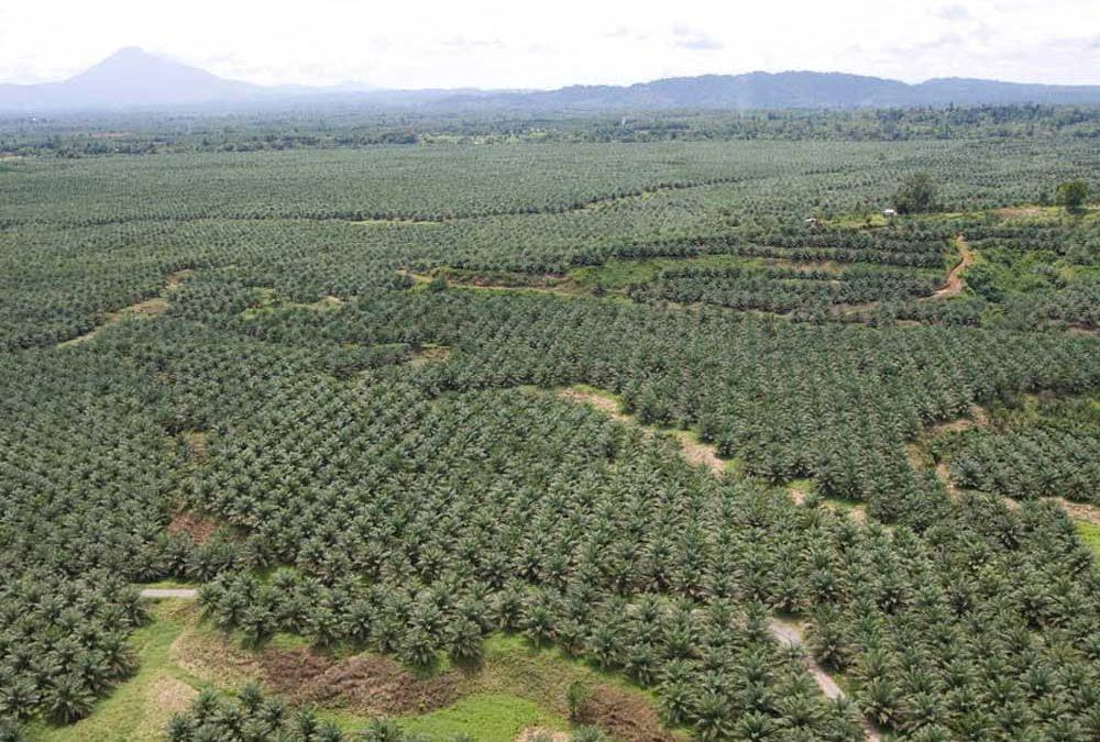 Olej palmowy- w czym jest problem?