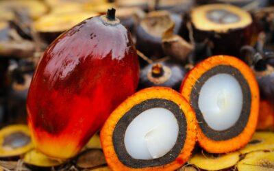 Raport z badania poziomu certyfikowanego oleju palmowego w Polsce, 2020.