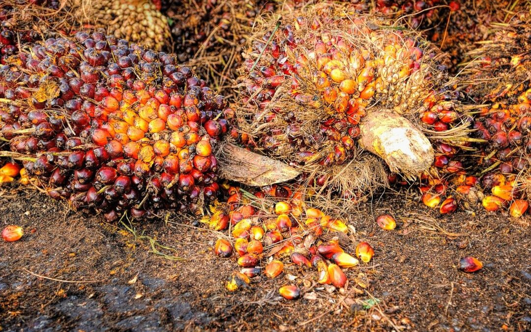 Raport z badania poziomu certyfikowanego oleju palmowego w Polsce 2021.
